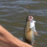 łowienie ryb za pomocą wędziska Dragon